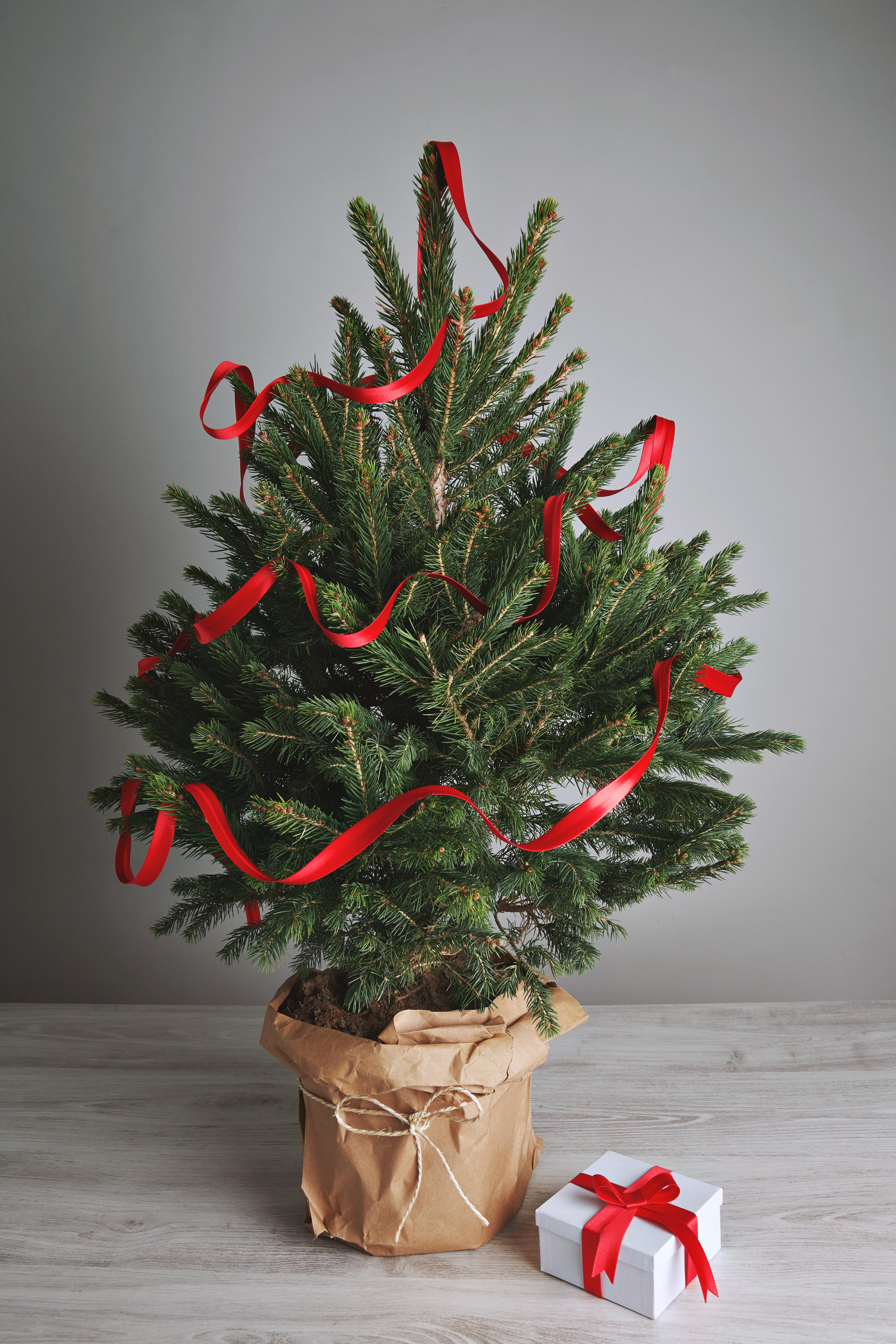 Fabriquer Des Sapins De Noel mon sapin de noël : l'acheter, le louer ou le fabriquer